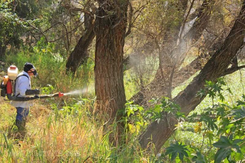 Fumigacion de arboles y jardines jardineros for Arboles de jardin